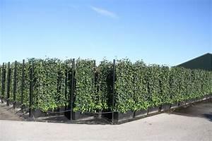 Gartenzaun Höhe Zum Nachbarn : pflanzenspecial heckenelemente exklusivit t und ~ Lizthompson.info Haus und Dekorationen