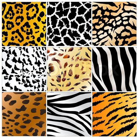 set    wild animals stock vector
