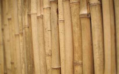 Wood Bamboo 1080p Wooden Stems Wallpapers Its