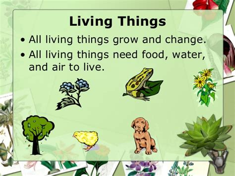 Living Things Clipart Collection