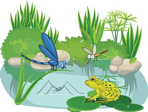 pond clip art vector images illustrations istock