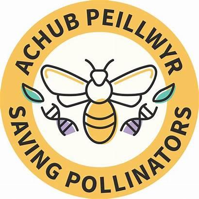 Wales National Garden Botanic Officinalis Pollinators Wallflower