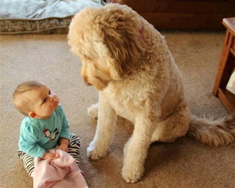 25 Adorable Photos That Prove Why Babies Need Pets