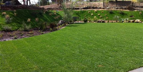 Backyard Grass lawn grasses for landscaping landscaping network