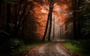 Wallpaper, Sunlight, Trees, Landscape, Fall, Leaves, Nature, Grass, Sky, Road, Branch, Evening