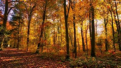 Viewes Sunny Leaf Trees Forest Autumn Way