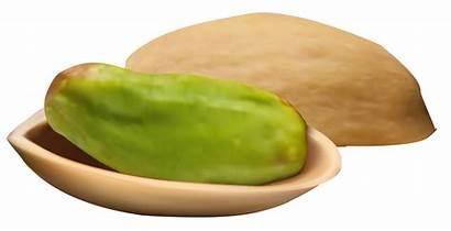 Pistachio Clipart Nut Pistachios Nuts Clipartpng Cliparts