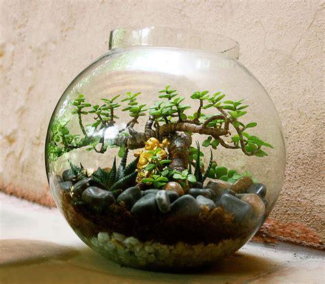 terrarium plants terrariums india ozziesterrariums