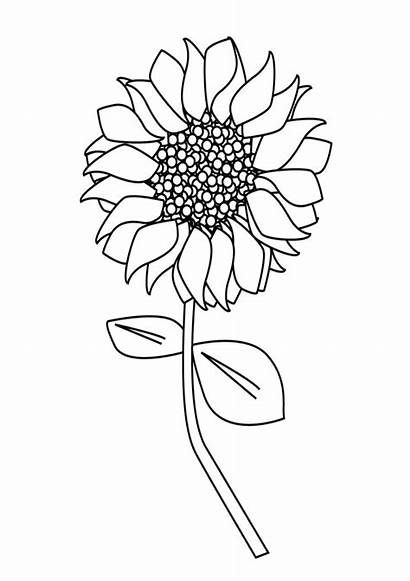 Coloring Sunflower Single