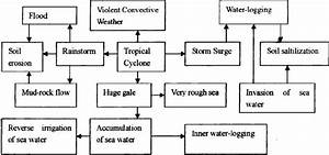 3  Flow Chart Showing The Chain Effects Of Typhoon