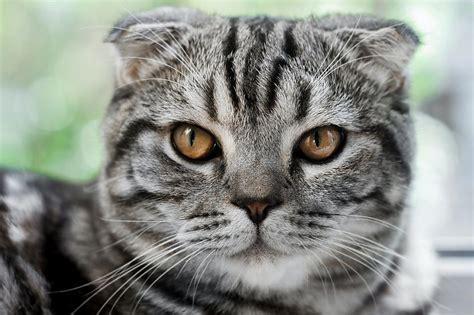 Desmit ļoti interesanti fakti par kaķiem - Spoki