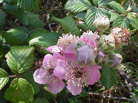 mandare fiori a distanza le piante dell erbario 6 i rustine 171 ponza racconta