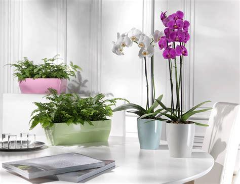 piante ufficio purificare l dell ufficio con le giuste piante il