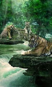 Tiger Falls   Wild cats, Wild creatures, Animals beautiful