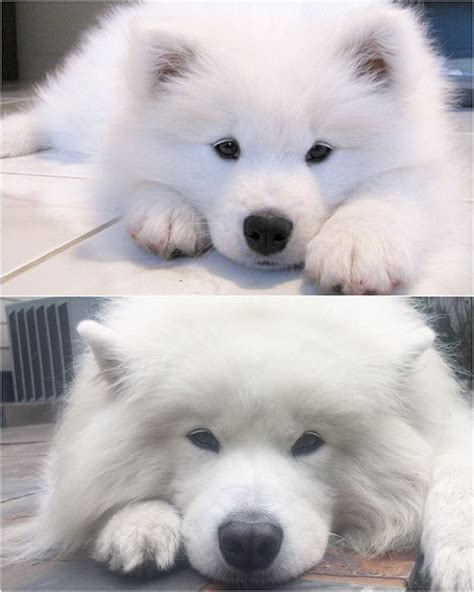 Before And After Cute As Button Always Cutesamson