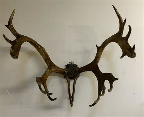 antiques atlas large reindeer antlers