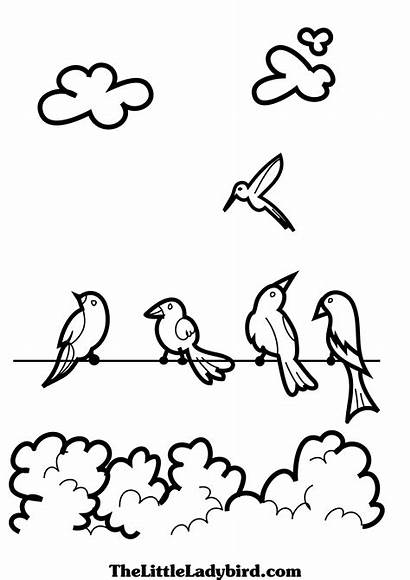 Coloring Birds Flock Treetops Designlooter 3508px 13kb