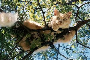 Quiet Corner:How to Get a Cat Down From a Tree - Quiet Corner
