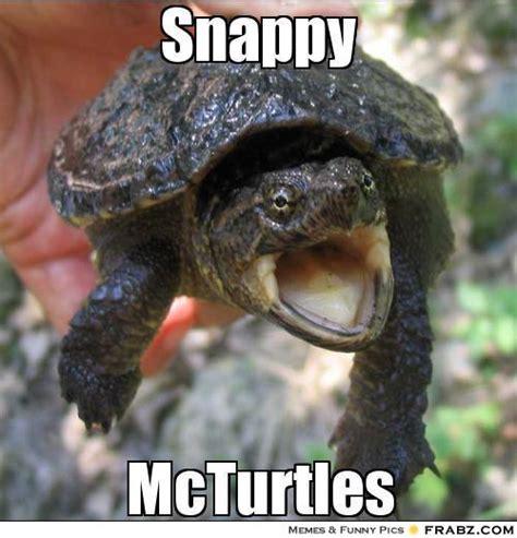 Turtle Meme - cute baby turtles memes