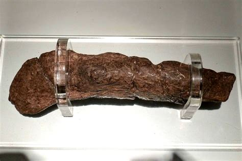 Fossilized human feces from 14th century contain ...