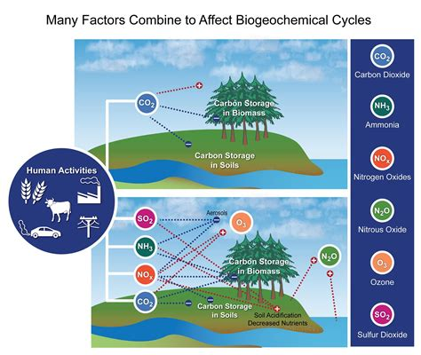 Modified Behavior Definition by Many Factors Combine To Affect Biogeochemical Cycles