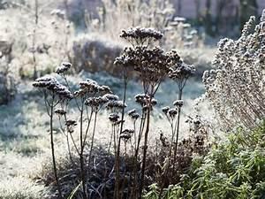 Wie Oft Blumen Gießen : pflanzen auch im winter regelm ig gie en ~ Orissabook.com Haus und Dekorationen