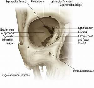 Supratrochlear Foramen Related Keywords - Supratrochlear ...