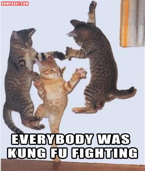 funny pictures kung fu fighting cats dump  day