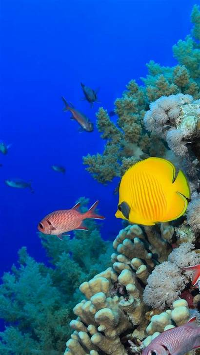 Fish Tropical Iphone Wallpapers Sfondi Tropicali Popolare