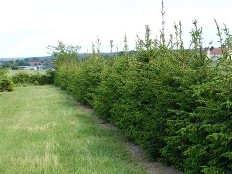 tannenbaum kaufen my blog