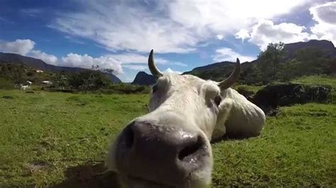 curious  sniffing  gopro youtube