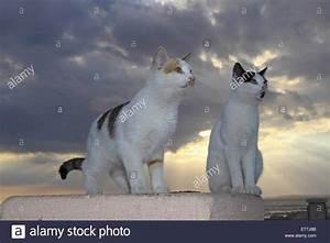 Katze Im Haus Halten : hauskatze haus katze felis silvestris f catus zwei ~ Lizthompson.info Haus und Dekorationen
