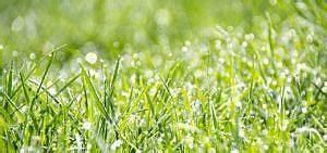 Wann Wächst Rasen : bauerngarten 10 tipps wie du alles richtig machst ~ Markanthonyermac.com Haus und Dekorationen