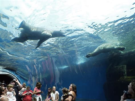 underwater tunnel aquarium zoo pennsylvania pittsburgh polar ppg way bears onlyinyourstate enchant possible