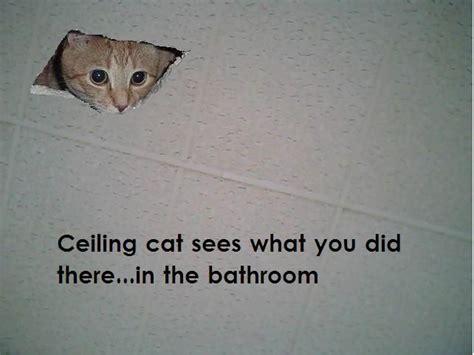 Ceiling Cat Meme - accounting cartoons bing images