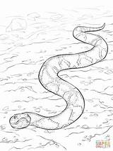 Snake Coloring Copperhead Supercoloring Southern Python Snakes Printable Dibujo Water Serpent Moccasin Colorear Serpiente Colouring Coloriage Anaconda Dibujos Sur Cobre sketch template
