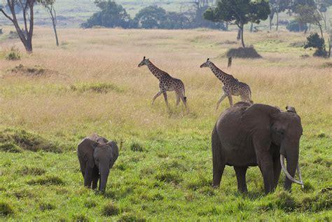 African Savanna Animals That Live