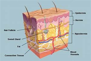 Skin Picture Image on MedicineNet.com