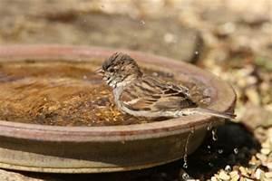 Vogeltränke Selber Bauen : vogelbad im naturgarten ~ Orissabook.com Haus und Dekorationen