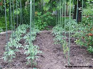 Bohnen Anbauen Anleitung : tomaten im garten tomaten in den garten pflanzen tomatenvielfalt tomaten im garten foto 801 ~ Whattoseeinmadrid.com Haus und Dekorationen