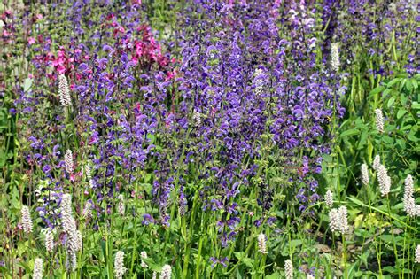 blaue pflanzen für den garten pflanzen f 252 r den insektengarten nabu
