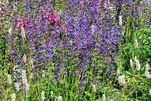 Pflanzen Für Trockenmauer : pflanzen f r den insektengarten nabu ~ Orissabook.com Haus und Dekorationen