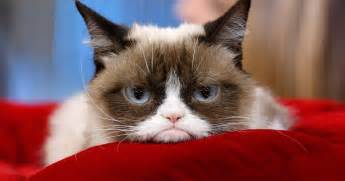 best cat top 10 grumpy cat memes