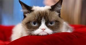 Top 10 Grumpy Cat Memes