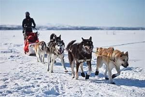 Quel Matelas Pour Quel Poids : quel poids peut tirer un husky quel poids peut tracter un chien equipement actu et conseils ~ Mglfilm.com Idées de Décoration