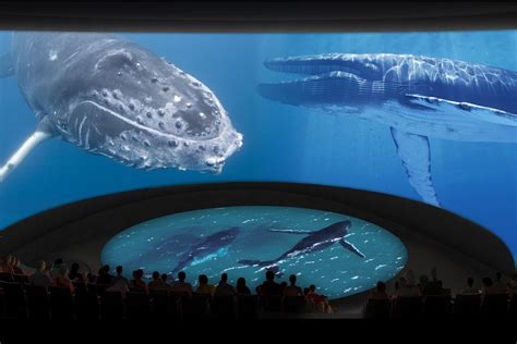 aquarium pacific aquarium expansion will add 29 000 square archpaper