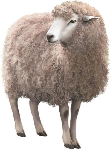 sheep  vector    vector