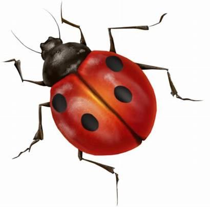 Ladybug Bug True Pngimg Transparent Insect Ladybird