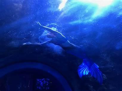 Mermaids Aquarium Newport Mermaid Pirates Swim Reef