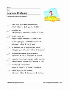 Seahorse Challenge Worksheet For 2nd